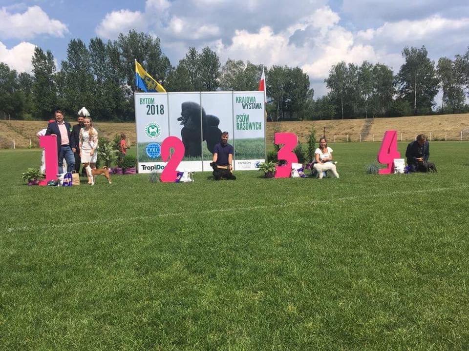 Diva na Krajowa Wystawa w Bytomiu 10.06.2018