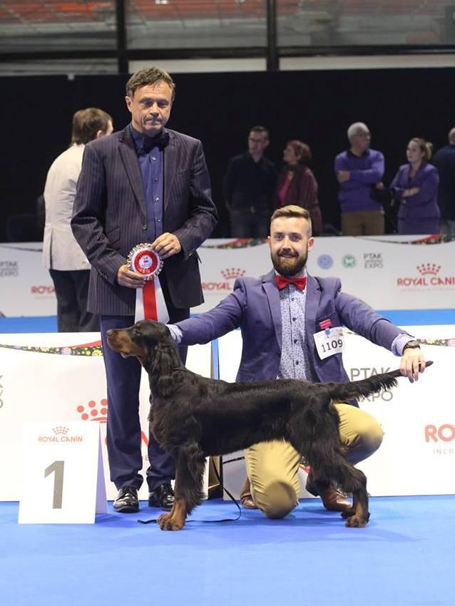 SWEET CHOCOLATE BLACK Lofty - EUROPEAN FUTURE 2018 & BOB Puppy