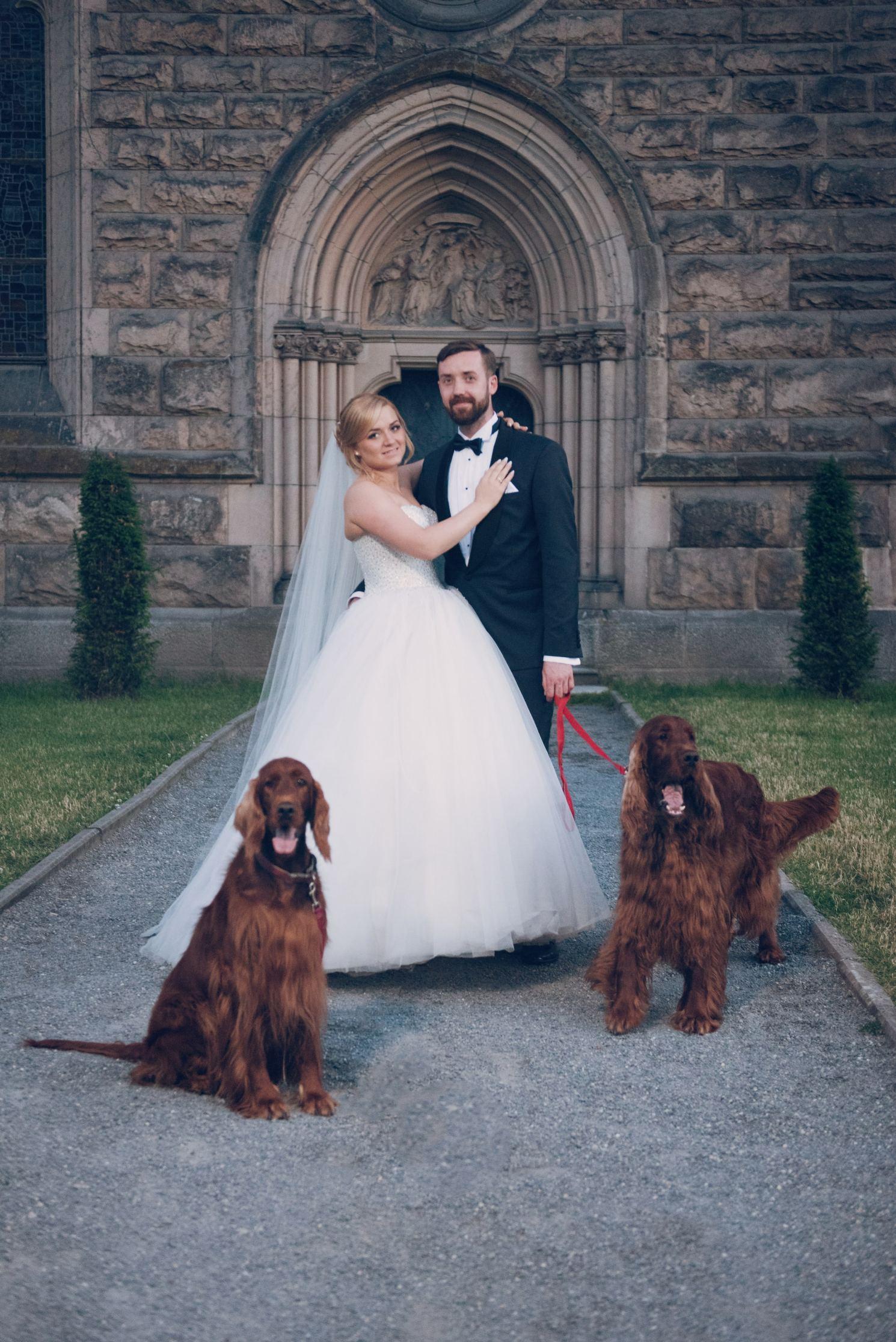 imperialsetter hodowla seterów irlandzkich, szkockich i cocker spanieli amerykańskich zdjęcie ślubne właścicieli przed pałacem