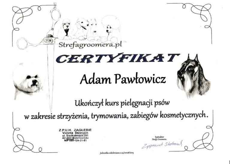 certyfikat groomera imperialgroom adam pawłowicz